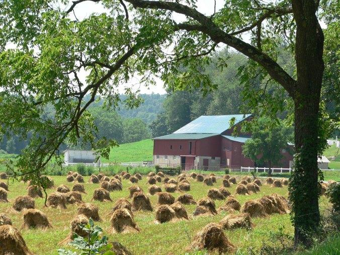 Harvest July 06 079